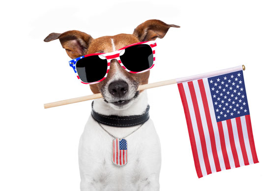 pets 4th of july safety